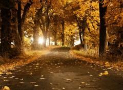 Nature route d'automne