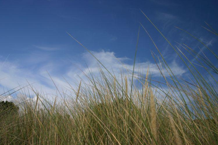 Fonds d'écran Nature Herbes herbes de dune