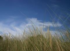 Nature herbes de dune