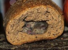 Animaux Niche de pain
