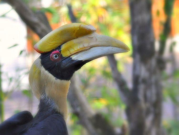 Fonds d'écran Animaux Oiseaux - Calaos Calaos