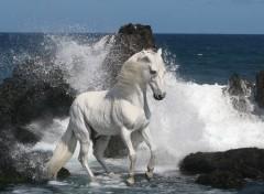 Animaux Cheval dans les vagues.
