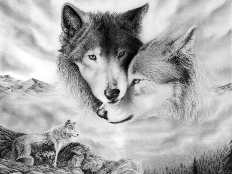 Fonds D Ecran Art Crayon Fonds D Ecran Animaux Loups Loups