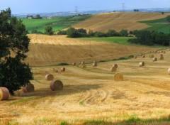 Nature Champ de blé moissonné en campagne Lot et Garonnaise