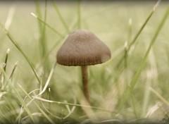 Nature Un petit champignon