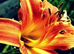 Nature J'ai joué avec la couleur de cette fleur x) Pour changer un peu.