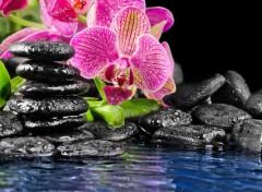Nature Zen.