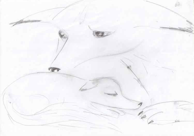 Fonds d'écran Art - Crayon Animaux - Divers Wallpaper N°308716