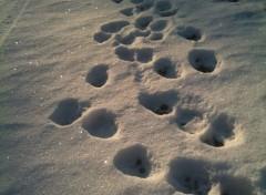 Nature Traces dans la neige