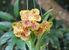 Nature Fleurs tropicales (974)