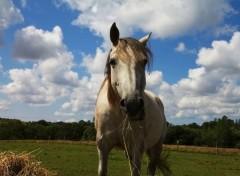 Animaux portrait des chevaux