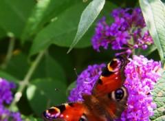 Animaux beau papillon
