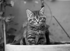 Animaux Chat