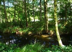 Nature des rivieres et des arbres