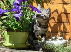Animals j adore les fleurs