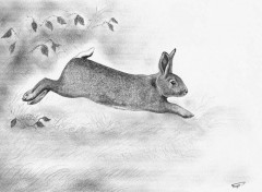 Art - Pencil Lapin de Garenne