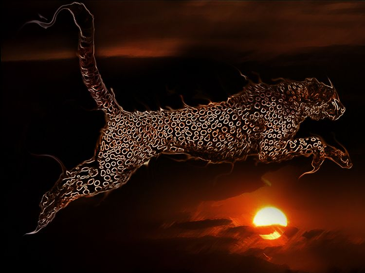 Wallpapers Animals Felines - Cheetahs Puma on Fire