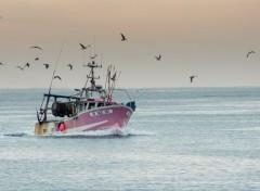 Boats retour de pêche