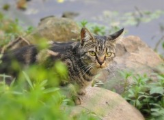 Animaux Chat aux yeux verts