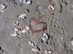 Nature un coeur echoue sur la plage