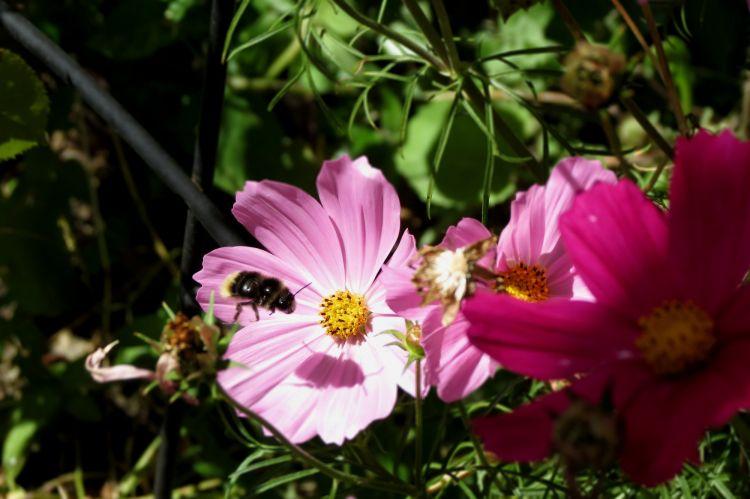 Fonds d'écran Nature Fleurs Wallpaper N°311206