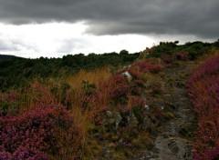 Nature vallée du daoulas et abbaye du bon repos