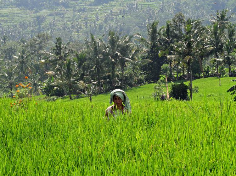 Wallpapers Trips : Asia Bali pics of bali