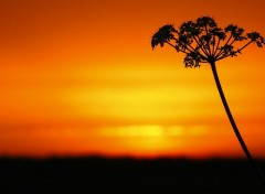 Nature Un Air d'Afrique