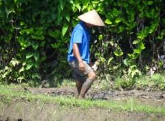 Trips : Asia pics of bali