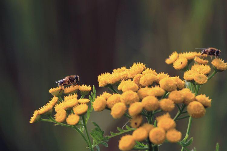 Fonds d'écran Nature Fleurs Wallpaper N°311701
