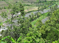 Trips : Asia pics of bali 2