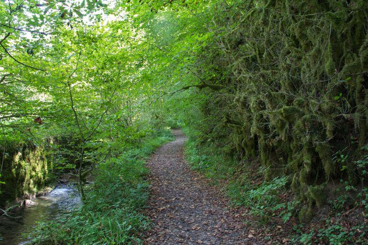 Fonds d'écran Nature Arbres - Forêts forêt à farfadet .......