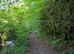 Nature forêt à farfadet .......