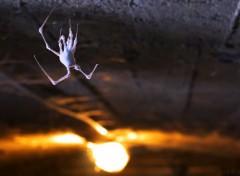 Animals Une araignée fossile.