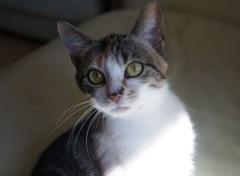 Animals Poly !  une petite chatte de 1 ans, qui aime faire les 400 coups avec sa maîtresse de 3 ans
