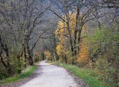 Nature le chemin blanc
