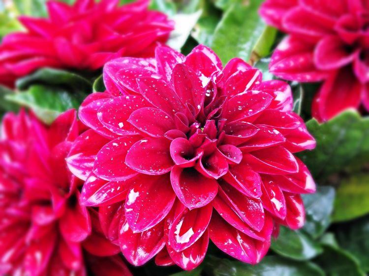 Fonds D Ecran Nature Fonds D Ecran Fleurs Une Fleur De Mon Balcon