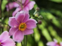 Nature petite fleur