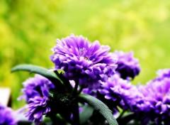Nature Jolie fleur