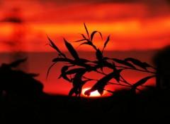 Nature coucher de soleil sur plante