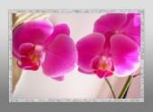 Nature orchidée