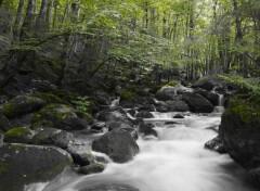 Nature Green River