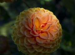 Nature Fleur du jardin