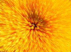 Nature tournesol