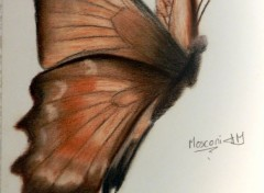 Art - Pencil (Eternel) papillon!