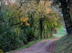 Nature chemin d'autonme