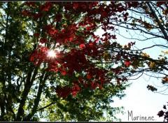Nature C'est l'automne !