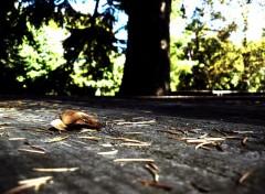 Nature feuille_seule