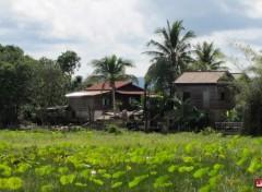 Voyages : Asie Riziere du nord du cambodge