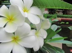 Nature Lotus et autres plantes...